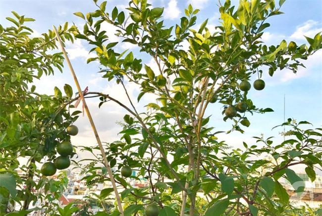 Khu vườn trên sân thượng rộng tới 200m² bạt ngàn rau quả sạch của nữ doanh nhân Sài Thành - Ảnh 17.