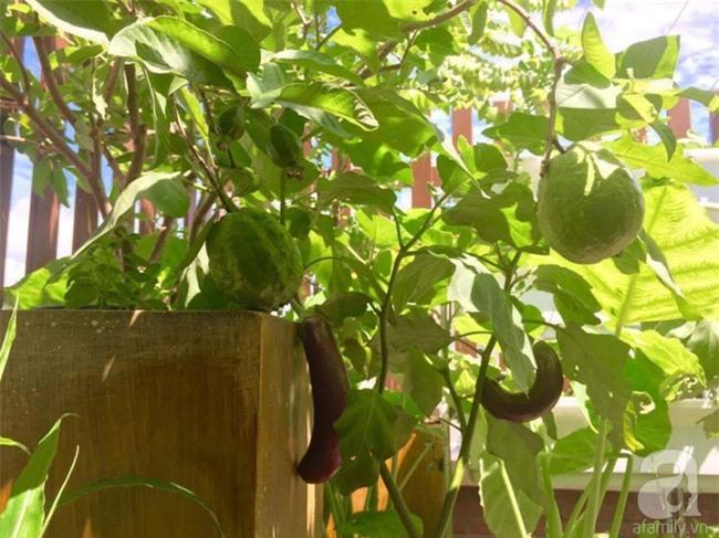 Khu vườn trên sân thượng rộng tới 200m² bạt ngàn rau quả sạch của nữ doanh nhân Sài Thành - Ảnh 18.