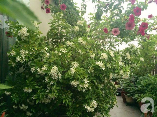 Khu vườn trên sân thượng rộng tới 200m² bạt ngàn rau quả sạch của nữ doanh nhân Sài Thành - Ảnh 19.