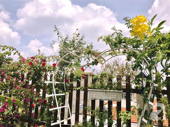 Khu vườn trên sân thượng rộng tới 200m² bạt ngàn rau quả sạch của nữ doanh nhân Sài Thành - Ảnh 2.