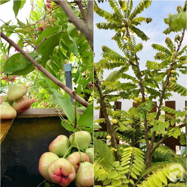 Khu vườn trên sân thượng rộng tới 200m² bạt ngàn rau quả sạch của nữ doanh nhân Sài Thành - Ảnh 23.