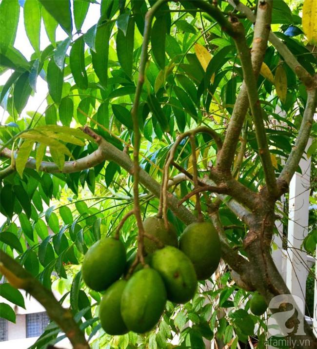 Khu vườn trên sân thượng rộng tới 200m² bạt ngàn rau quả sạch của nữ doanh nhân Sài Thành - Ảnh 25.