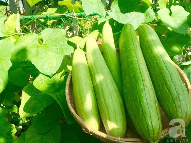 Khu vườn trên sân thượng rộng tới 200m² bạt ngàn rau quả sạch của nữ doanh nhân Sài Thành - Ảnh 27.