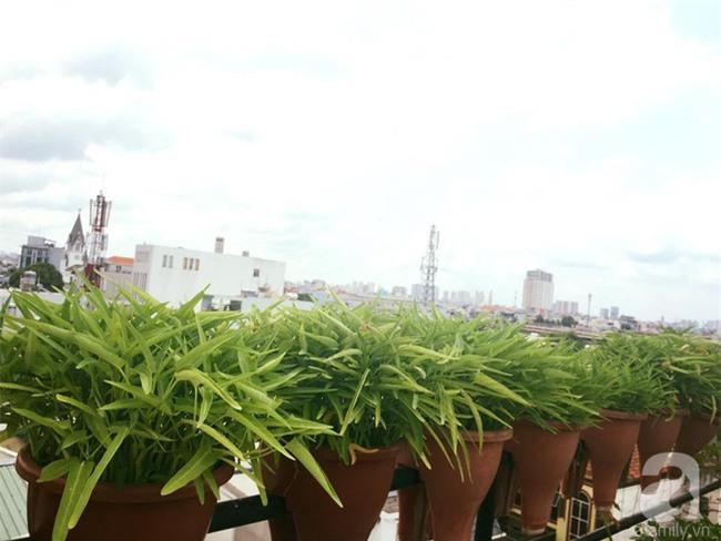 Khu vườn trên sân thượng rộng tới 200m² bạt ngàn rau quả sạch của nữ doanh nhân Sài Thành - Ảnh 29.