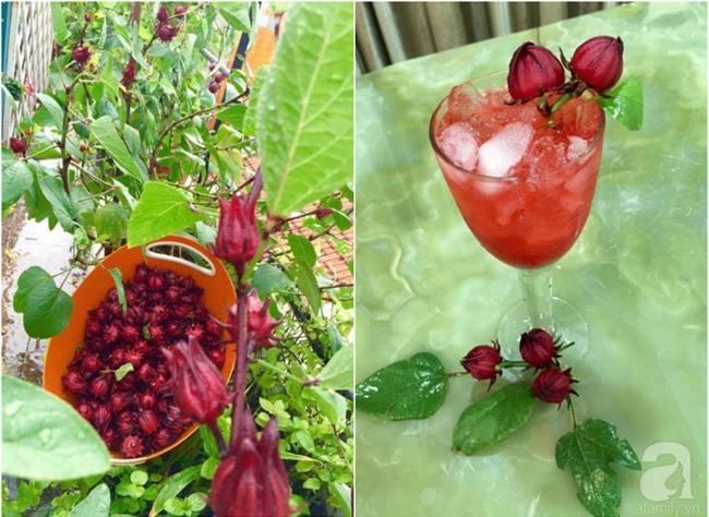Khu vườn trên sân thượng rộng tới 200m² bạt ngàn rau quả sạch của nữ doanh nhân Sài Thành - Ảnh 34.