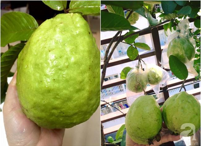 Khu vườn trên sân thượng rộng tới 200m² bạt ngàn rau quả sạch của nữ doanh nhân Sài Thành - Ảnh 36.