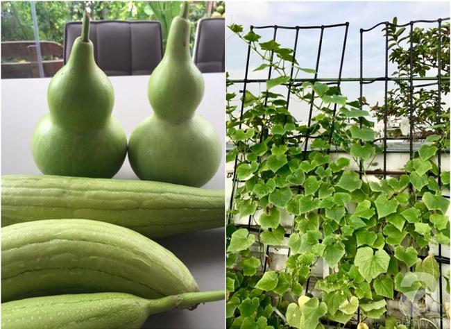 Khu vườn trên sân thượng rộng tới 200m² bạt ngàn rau quả sạch của nữ doanh nhân Sài Thành - Ảnh 37.