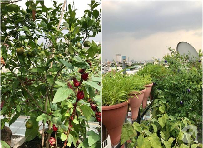 Khu vườn trên sân thượng rộng tới 200m² bạt ngàn rau quả sạch của nữ doanh nhân Sài Thành - Ảnh 38.