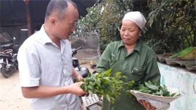 rau rừng, trồng rau, nông dân, rau sạch