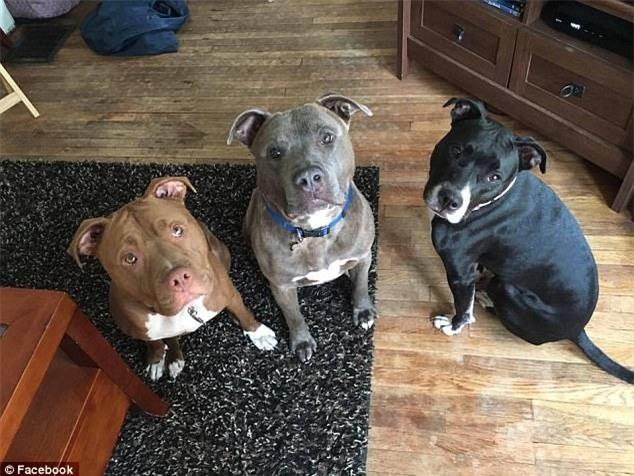 Chỉ 5 phút ở một mình cùng 3 con chó pit bull, bé gái 3 tuần tuổi bị cắn đến chết - Ảnh 4.
