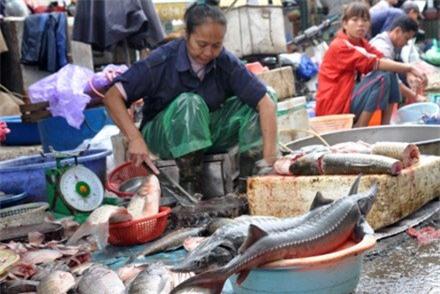 cá quả, cá tầm, hàng Tàu, đột lốt, thực phẩm bẩn