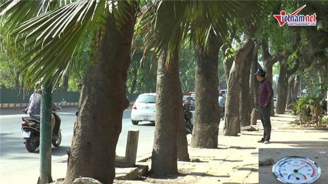 nắng nóng,nắng nóng kỷ lục,nóng kỷ lục,hàng cây,di dời cây xanh,Hà Nội