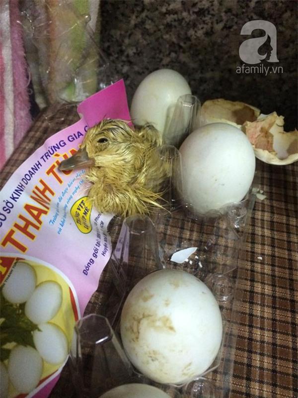 Mua trứng cút lộn về ăn giữa ngày nóng khủng khiếp, cô bé 15 tuổi bất ngờ trở thành mẹ đơn thân - Ảnh 6.