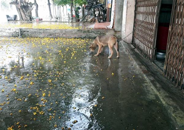 Hà Nội: Một số nơi đã xảy ra mưa rào, chính thức chấm dứt đợt nắng nóng kỷ lục - Ảnh 2.