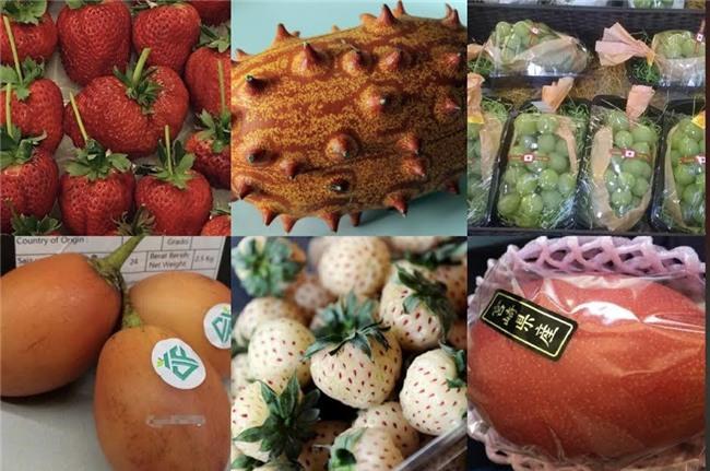 hoa quả nhập khẩu, hoa quả độc lạ, hoa quả nhật bản, dân giàu việt, đặc sản nhà giàu