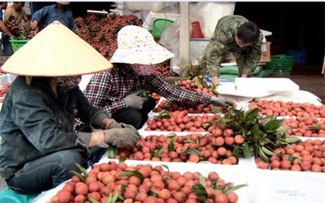 Trung Quốc sẽ mua 40.000 tấn vải Bắc Giang - ảnh 1