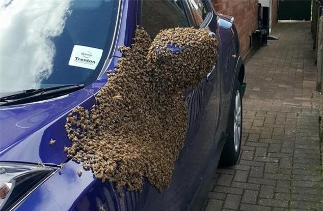 2 vạn con ong bu kín cửa xe ô tô, lái xe không thể chui vào - 1
