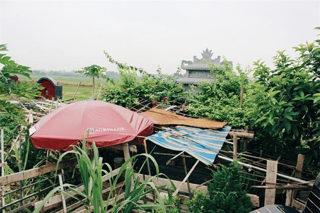 Chuyện tình yêu của cụ ông tự tay trồng và chăm sóc cả một vườn hoa ngát hương bên mộ phần người vợ đã khuất - Ảnh 6.