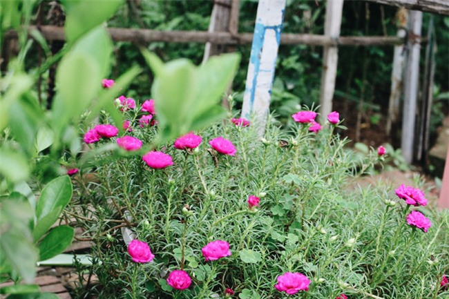 Chuyện tình yêu của cụ ông tự tay trồng và chăm sóc cả một vườn hoa ngát hương bên mộ phần người vợ đã khuất - Ảnh 7.