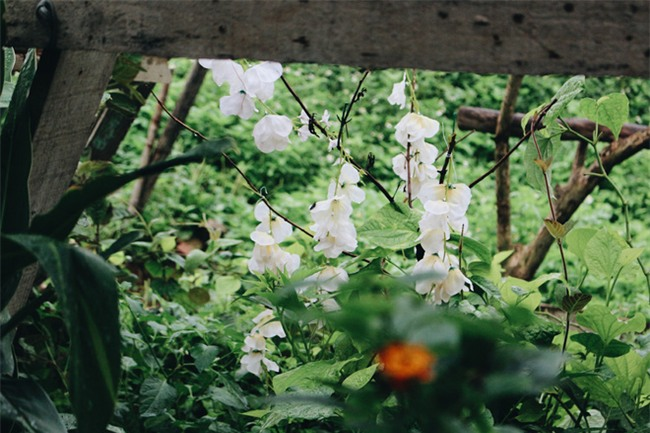 Chuyện tình yêu của cụ ông tự tay trồng và chăm sóc cả một vườn hoa ngát hương bên mộ phần người vợ đã khuất - Ảnh 4.