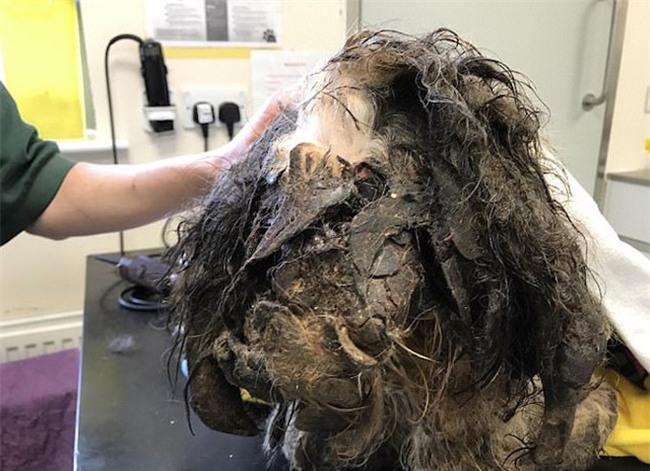 Chú chó đáng thương bị đổ keo bê bết lên người, chân dính chặt vào tai - Ảnh 1.