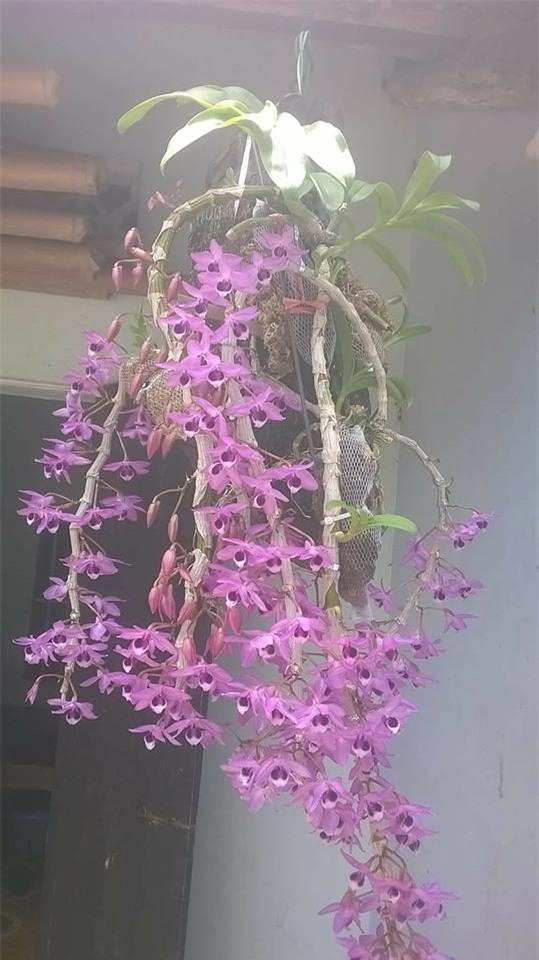 Giận chồng mê hoa hơn vợ, cô gái ghen tức vặt trụi chậu phong lan xinh đẹp của chồng - Ảnh 2.