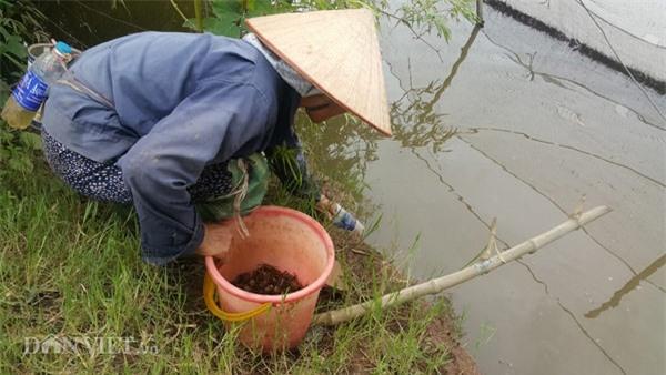Dùng chai nhựa thải bẫy cáy, nông dân Cố đô kiếm 1 triệu đồng/ngày - 1