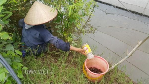 Dùng chai nhựa thải bẫy cáy, nông dân Cố đô kiếm 1 triệu đồng/ngày - 3