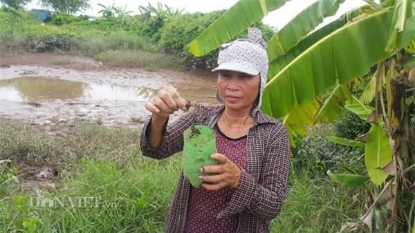 Dùng chai nhựa thải bẫy cáy, nông dân Cố đô kiếm 1 triệu đồng/ngày - 6