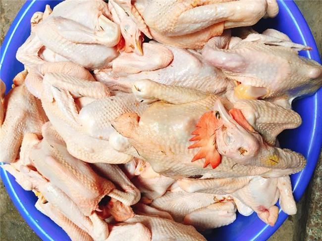 gà ri, nuôi gà, gà thải loại, giá thịt gà giảm