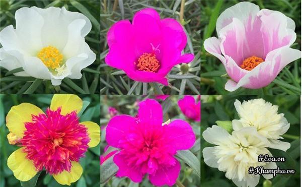 me man vuon hoa muoi gio ruc ro ven song cua chang trai hoc kien truc me hoa - 6