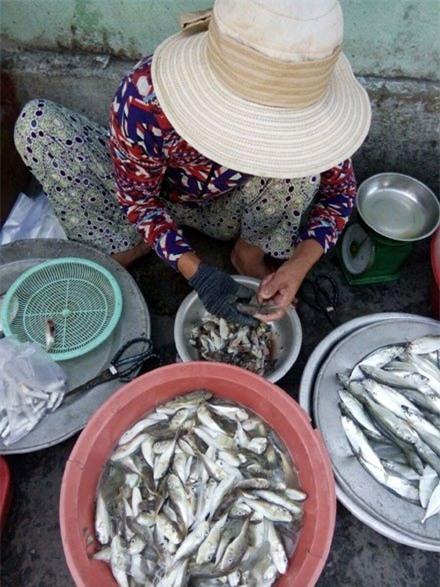cá nóc, đặc sản, hải sản, ngư dân, nông dân, Nhật Bản