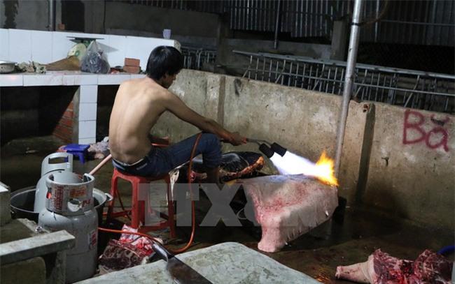 thực phẩm bẩn, gà thải loại, thịt gà, yến huyết, lợn rừng, tam thất, phở, cá sấu, chuối
