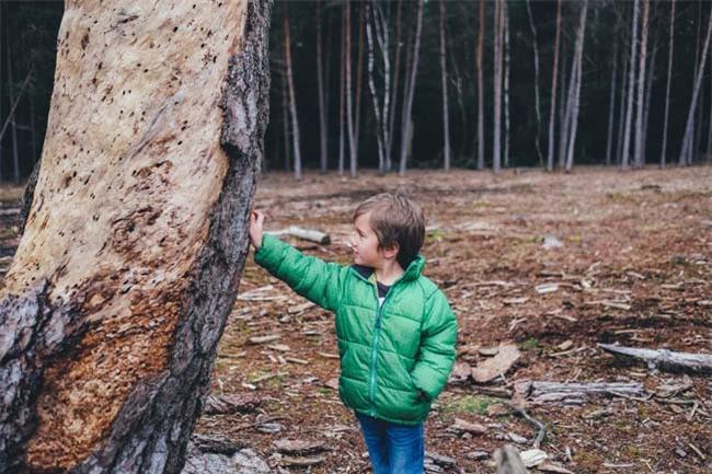 Đừng bỏ lỡ 10 lợi ích mỹ mãn của giáo dục ngoài trời đối với trẻ - 2