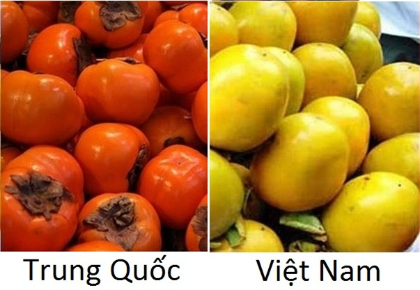 Hồng Trung Quốc (trái) và hồng Việt Nam