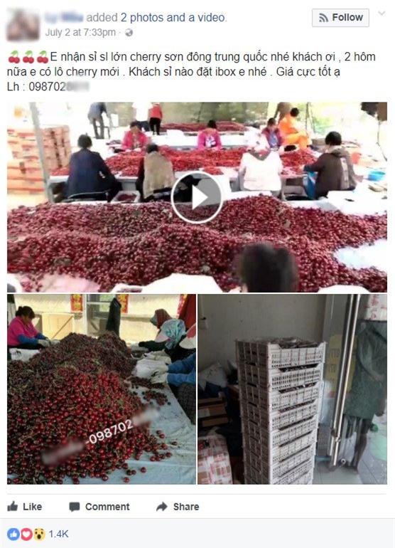 hoa quả nhập lậu, hoa quả Trung Quốc, thực phẩm bẩn, cherry, hoa quả ngoại