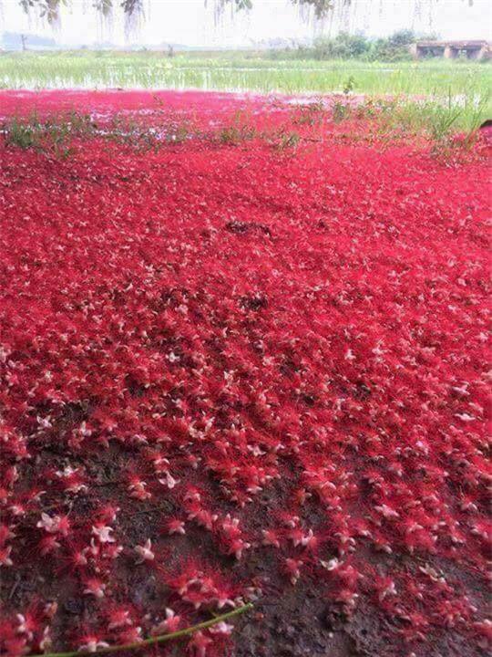 Loài hoa vừa lạ vừa quen bỗng dưng khuấy đảo mạng xã hội với những hình ảnh đẹp ngất ngây - Ảnh 7.