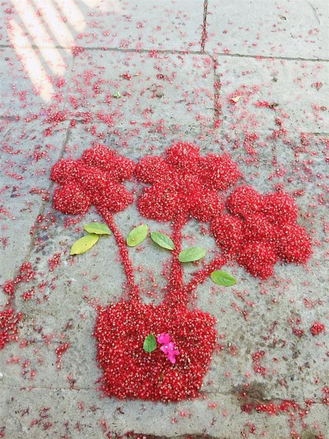 Loài hoa vừa lạ vừa quen bỗng dưng khuấy đảo mạng xã hội với những hình ảnh đẹp ngất ngây - Ảnh 9.