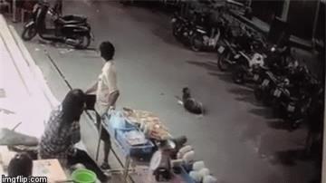 Chú chó đang đứng giữa đường thì bị chiếc ô tô lao tới chèn qua người - Ảnh 2.