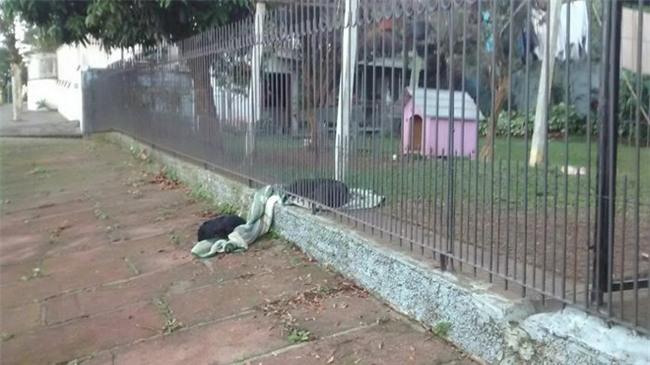 Thấy chú chó ngày nào cũng lôi chăn mới ra ngoài vườn, người chủ cảm động khi biết câu chuyện thật sự - Ảnh 2.