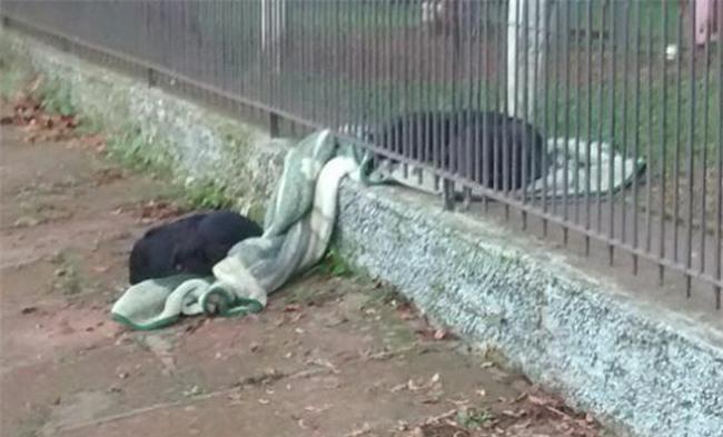 Thấy chú chó ngày nào cũng lôi chăn mới ra ngoài vườn, người chủ cảm động khi biết câu chuyện thật sự - Ảnh 3.