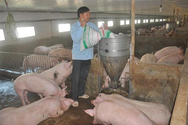 giá thịt lợn tăng mạnh, người chăn nuôi,chăn nuôi gia cầm