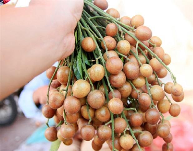 Vỏ quất hồng bì rất tốt cho sức khỏe