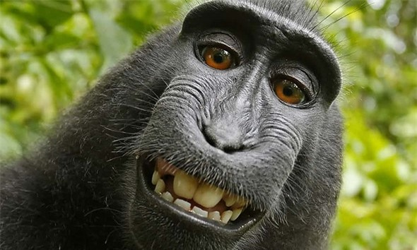 Nguoi dung sau buc anh 'con khi selfie' khanh kiet vi kien tung hinh anh 1
