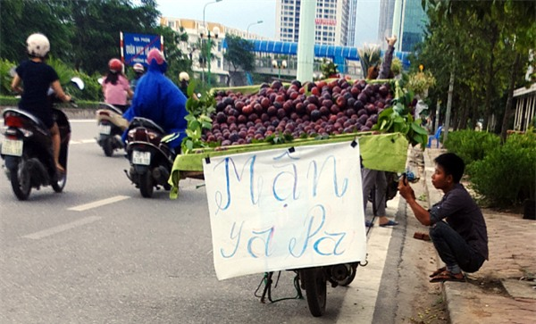 Mận khủng to như nắm tay nguồn gốc Trung Quốc đội lốt mận Sapa bán tràn lan trên đường phố Hà Nội - Ảnh 1.