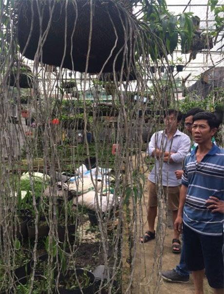 vườn lan, hoa lan, lan quý, lan rừng