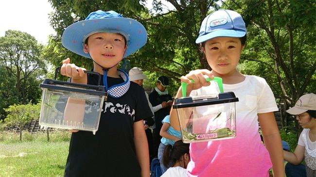 Thích thú với cách người Nhật dùng côn trùng làm giáo cụ dạy trẻ - Ảnh 2.