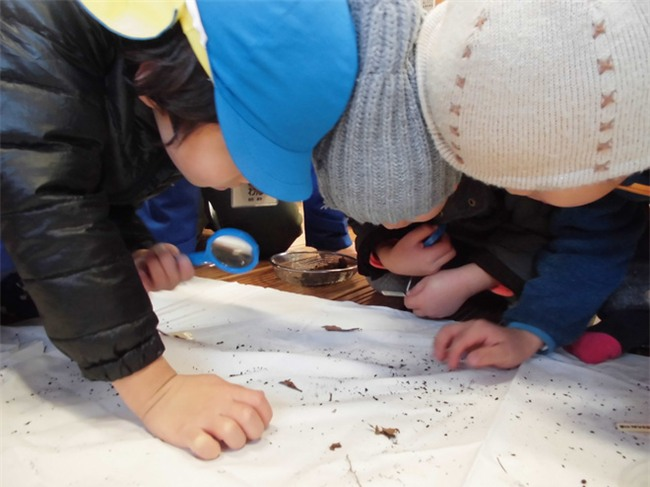 Thích thú với cách người Nhật dùng côn trùng làm giáo cụ dạy trẻ - Ảnh 7.