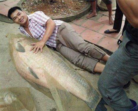 cá trắm đen, cá khủng, thủy quái, cá trắm