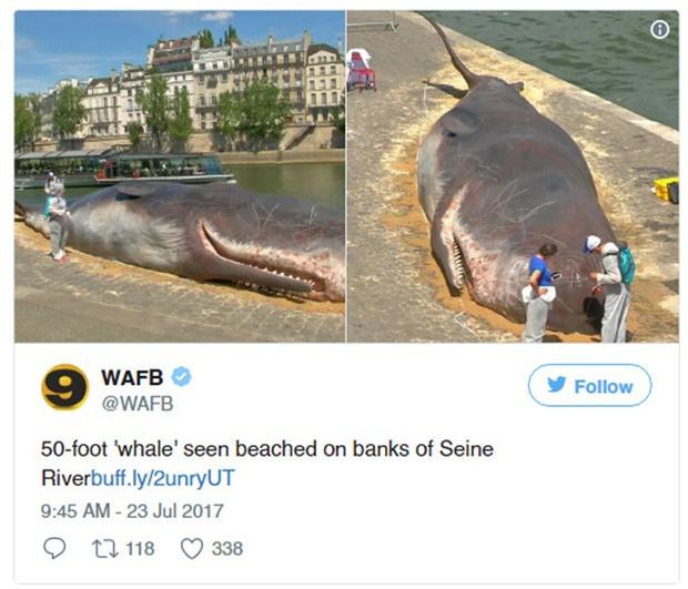 Cá voi khổng lồ phơi nắng giữa lòng Paris khiến người dân và du khách vô cùng kinh ngạc - Ảnh 2.